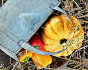 Recettes de légumes d'automne
