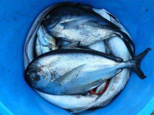 Recettes de poissons hiver